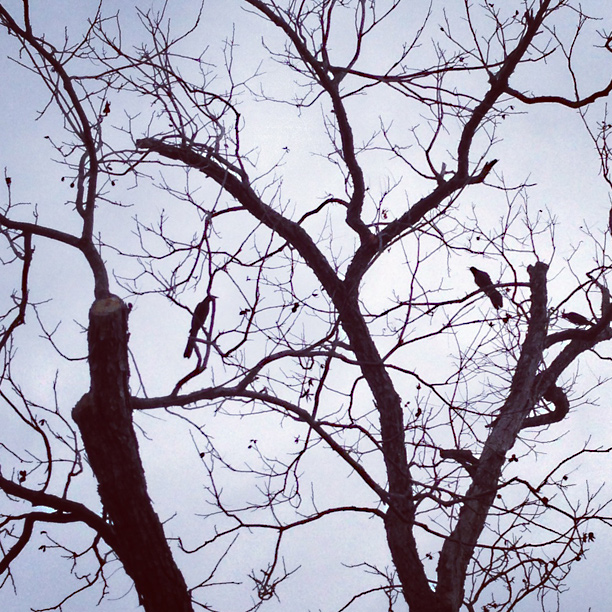 birds resting on tree branches - image by fangmarks