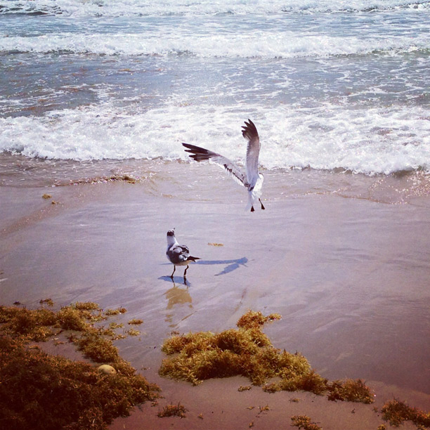 instagram photo by fangmarks - birds by the beach