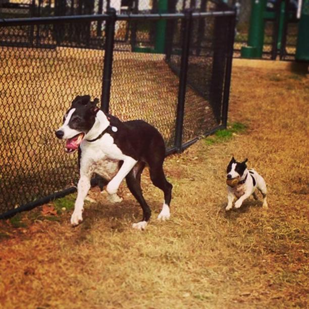 photo of dogs running